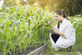 Biotechnology woman engineer examining plant leaf for disease Royalty Free Stock Photo