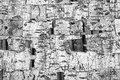 Birch bark texture, abstract background Royalty Free Stock Photo