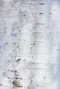 Birch bark texture or background Royalty Free Stock Photos