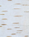 Birch bark Royalty Free Stock Photo