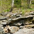 Birch grows on boulders