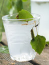 Birch juice Stock Photography