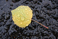 Birch leaf with raindrops in driveway on yellow Stock Images