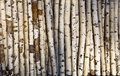 Birch log Stock Photos