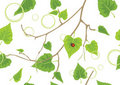 Birch sprig. Decorative spring background Stock Images