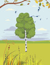 Birch and swallows summer landscape vector illustration Royalty Free Stock Photography