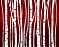Birch tree forest pattern Royalty Free Stock Photo
