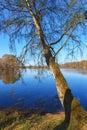 Birch tree at a lake Royalty Free Stock Photo