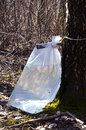 Birch tree sap drink flow to polyethylene bag Stock Photo