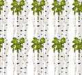 Birch tree.seamless pattern.vector.fabricDesign element for wallpapers, web site background, baby shower invitation, birthday card