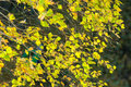 Birch trees in autumn. Photographed from a window on top of the Royalty Free Stock Photo