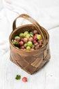 Birchbark basket full of ripe green and red gooseberries Royalty Free Stock Photo
