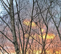 Birches at sunset background wonderful shining through in late autumn Stock Photos