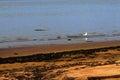 The bird along the shore on sea Royalty Free Stock Photo