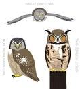 Bird American Owl Set Cartoon Vector Illustration