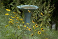Bird bath and flowers Royalty Free Stock Photos