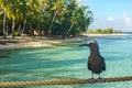 Bird in a beach in Tikehau Royalty Free Stock Photo