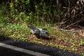 Bird in Big Island, Hawaii Royalty Free Stock Photo