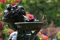 Pájaro en