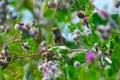 Bird Bluethroat