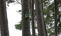 Bird box in the pines old green set high above tall a wood north of england Stock Images