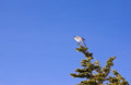 Bird on a Branch Royalty Free Stock Photo