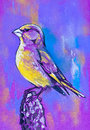 Bird on branch original pastel paintings cardboard Royalty Free Stock Photos