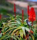Bird & Cactus Flower Royalty Free Stock Photo