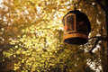 Bird cage in golden folium ginkgo at autumn Stock Photos