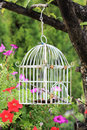 Bird cage house of Stock Photos