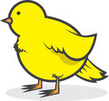 Bird canary chubby isolated yellow Stock Photography