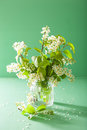 Bird cherry blossom in vase over green background Stock Photography