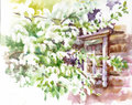 Bird cherry tree outside the window watercolor Stock Image