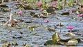 Bird ( Chinese Pond Heron ) , thailand Stock Photo