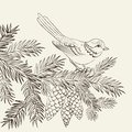 Bird on christmas fir and pinecone vector illustration Stock Photo