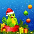 Bird on Christmas Gift Royalty Free Stock Photos