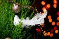 Bird on the Christmas tree with defocused lights background