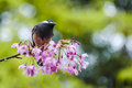 Bird clinging to a flower pink Stock Image