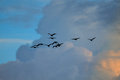 Bird and cloud flock of birds flying in the clouds Royalty Free Stock Image