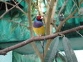 Bird colorful in the zoo Stock Image