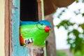 Bird doll in wood house closedup Royalty Free Stock Photos