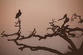 Bird at dusk sitting on a branch Royalty Free Stock Photos