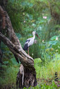 Bird eating under tree the the beside river Royalty Free Stock Image