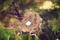 Bird egg in a nest one colorful with green background nature Stock Images