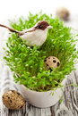 Bird and eggs on the  cress Royalty Free Stock Photos