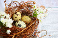 Bird eggs in nest on Bible. Stock Images