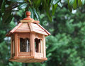 Bird feeder beaks open baby sparrows sitting in the with Stock Photography