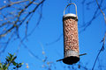 Bird feeder full of peanuts hanging against a blue sky from tree branch Royalty Free Stock Photo