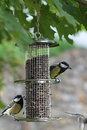 Bird feeder with great tit Royalty Free Stock Photos