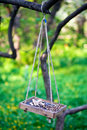 Bird feeder hanging on the tree branch Stock Image